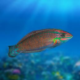AquaEl Reef Circulator 8000