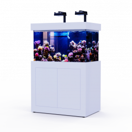 White Reef 320 (full)