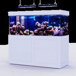 White Reef 650 (full)