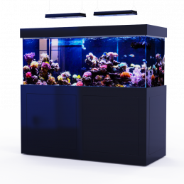 Black Reef 650 (full)