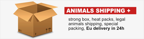 Animals delivery